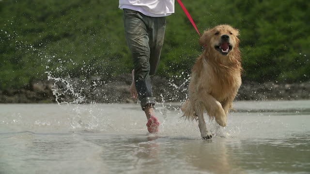 HD Slow motion:Young man and his dog running on the beach. video