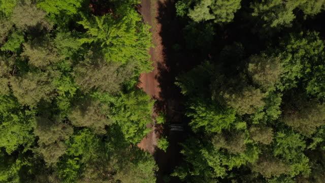 aerial: langsame overhead top down drone shot of dirt trail in rich green forest in deutschland europäischen wald in schönen grünen farbtönen - aerial view soil germany stock-videos und b-roll-filmmaterial