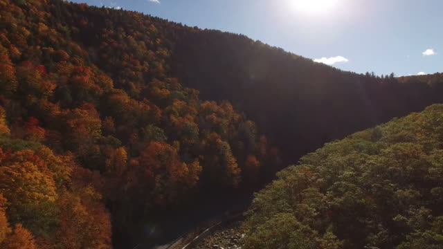 Slow Pan Above Fall Foliage video