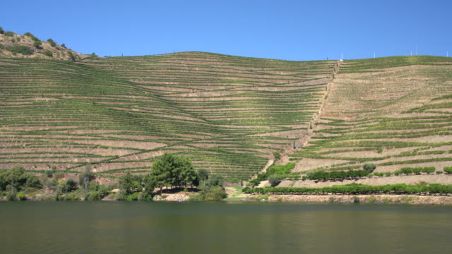 Slow pan across the terraced vineyard on the banks of the Douro river in Portugal - video