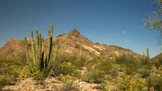 オルガン パイプ サボテンとアリゾナ州のツイン ・ ピークスのゆっくりとパン - オコティロサボテン点の映像素材/bロール