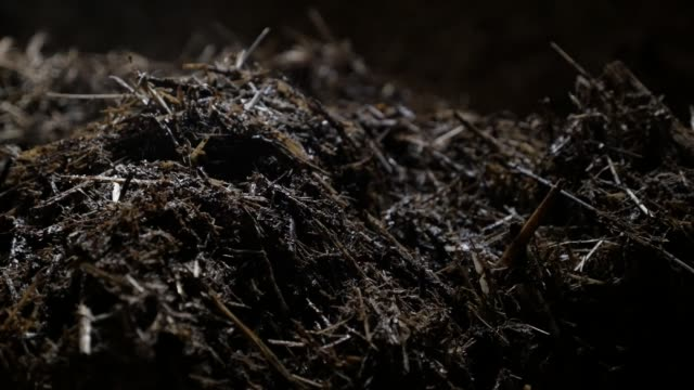 Slow pan on organic mixture of animal feces and bedding straw slow-mo  footage