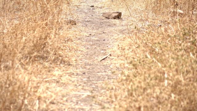 Slow Pan Up Dusty Path in Open Field in Israel video