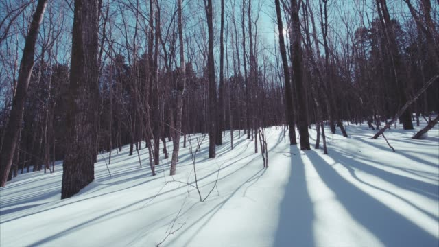 slow sliding view of beautiful snowy winter leafless forest. bright sunny day - purezza video stock e b–roll