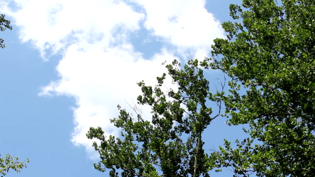 slow timelapse of clouds moving by a tree on sunny day - joseph kelly stock videos and b-roll footage