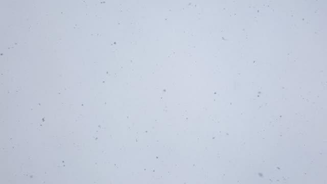 vídeos de stock e filmes b-roll de slowly falling snow flakes against white sky - cinza