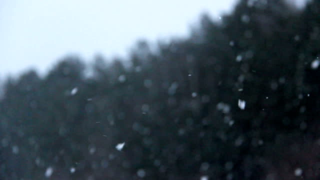slowly falling snow flakes and pine tree wood in background video