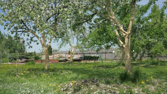 Slowly Falling White Petals In Flowering Apple Trees In Spring In The Garden Hd video