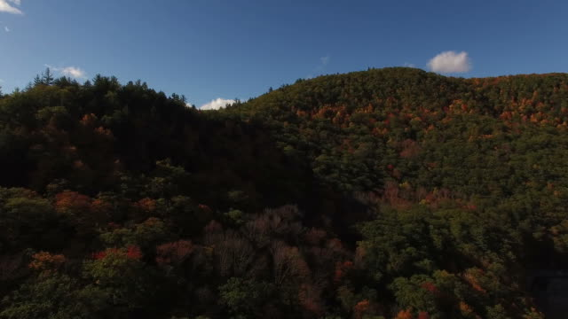 Slowly Panning Right Revealing Fall Foliage video