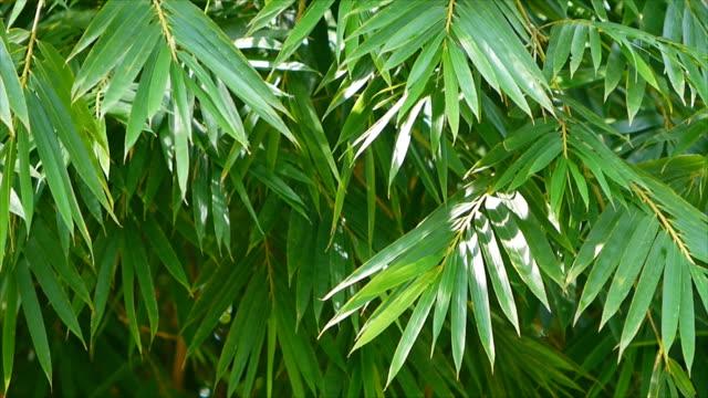 竹の葉のゆっくりと揺れ - 笹点の映像素材/bロール