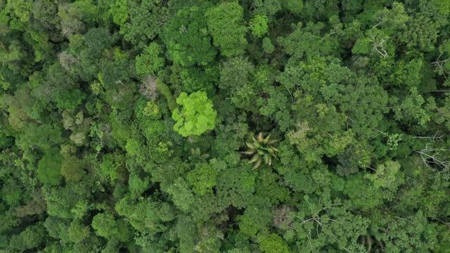 långsamt zooma ut på bladen på ett träd avslöjar broccely fältet i en tropisk skog med palmer och många nyanser av grönt - ekosystem bildbanksvideor och videomaterial från bakom kulisserna