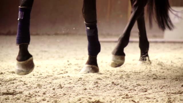slow-mo: häst sparkar sand medan du kör - häst tävling bildbanksvideor och videomaterial från bakom kulisserna