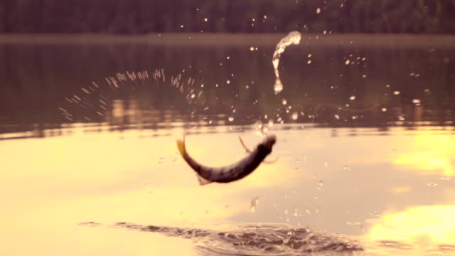 slow-motion: saltando di pesce - fishing video stock e b–roll