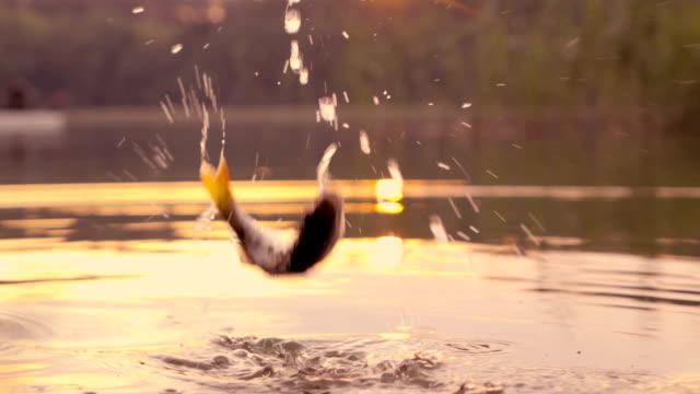 langsam mo: springen fische - fang stock-videos und b-roll-filmmaterial