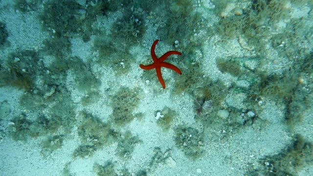 HD Slow-Mo: Starfish Sinking to the Seabed video
