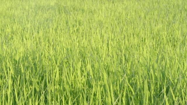 vídeos de stock e filmes b-roll de slowmotion - grassy leaves swaying in the wind - oscilar