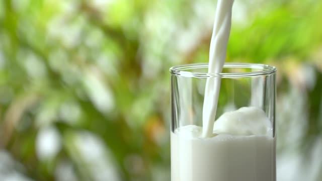 vídeos y material grabado en eventos de stock de slow-motion: verter la leche en un vaso sobre un fondo de hojas de follaje exuberante. - enfoque en primer plano