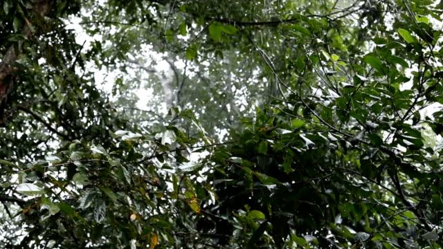 slow-motion, rain in rainforest video