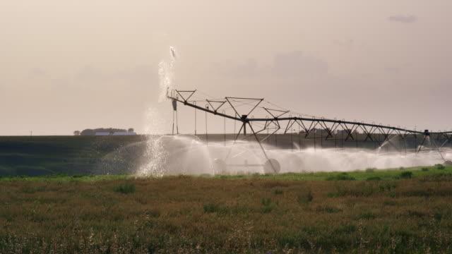vidéos et rushes de un tir lent-mouvement d'un système d'irrigation par pulvérisation à grande échelle center-pivot arrosant un champ de viol (canola) sur une ferme en alberta, canada - arroser