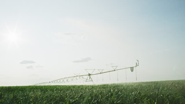 a slow-motion shot of a large-scale center-pivot spray irrigation system watering a field of rape (canola) on a sunny day in alberta, canada - canola video stock e b–roll