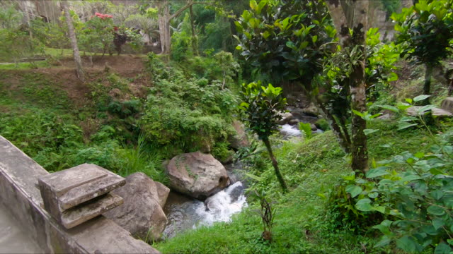 slowmotion shot of a small tropical river at a park around the gunnung kawi temple on the bali island - orticoltura video stock e b–roll