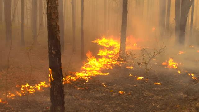 stockvideo's en b-roll-footage met traag voortbewegende vlammen in pine forest blad liter - bosbrand