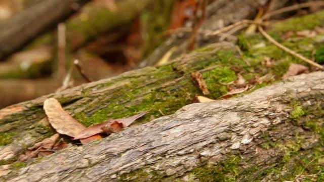 slug on a tree
