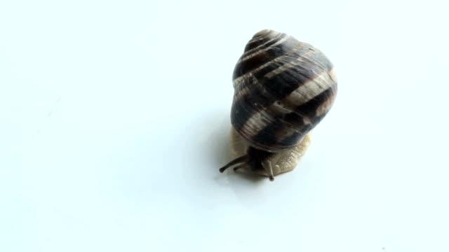 Slug on isolated white background video