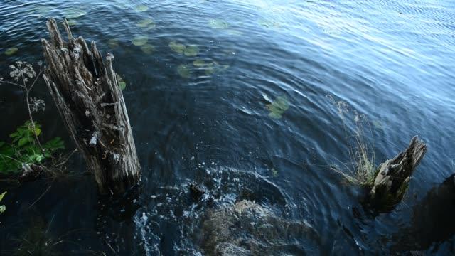 A small area of aquatic life