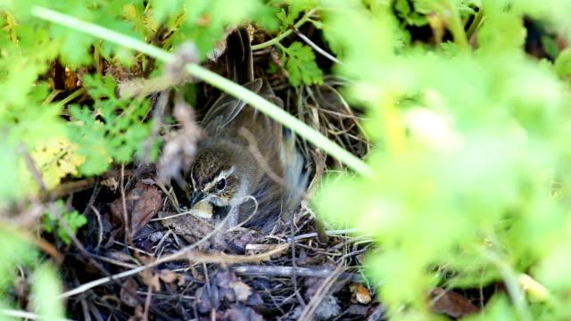 ein kleiner vogel und eier im nest - nest stock-videos und b-roll-filmmaterial