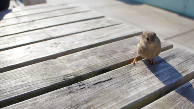 Small bird on table eating from hand video
