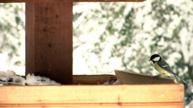 ağır çekimde besleyici üzerinde küçük kuşlar - sale stok videoları ve detay görüntü çekimi