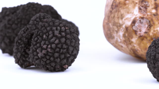 small black and one large white truffle. rotating on the on the turntable. isolated on the white background. closeup. macro. - alta moda italy video stock e b–roll