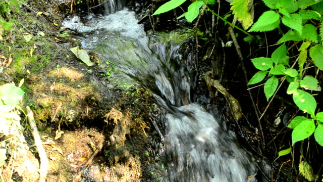 Small brook with waterfalls in a forest with lush green foliage video