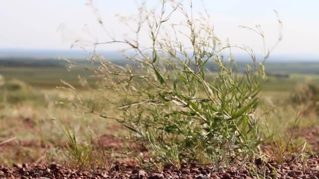 kleiner busch unter starkem wind in einem feld im sommer unter der sonne ein starker wind - elektrischer generator stock-videos und b-roll-filmmaterial