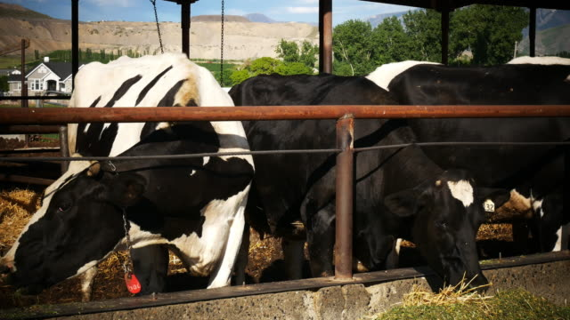 Small business in milk production