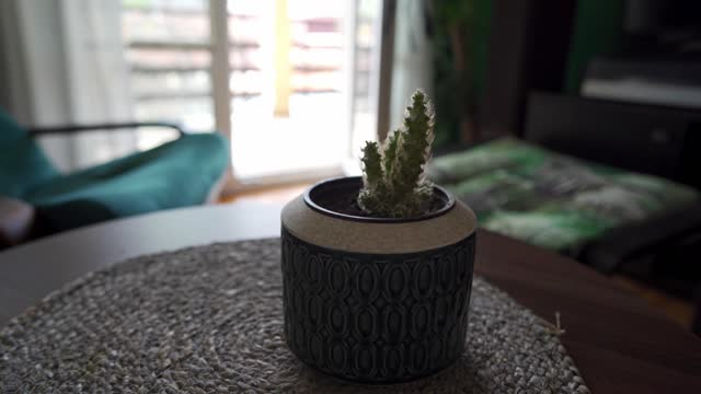 Small cactus in pot placed on the table in cozy living room