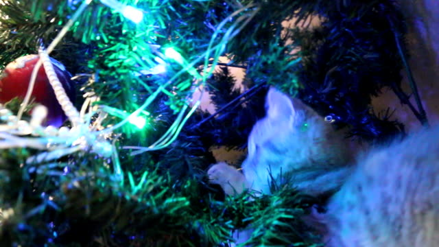 Small Cat Is Playing With A Christmas Tree Stock Video More Clips
