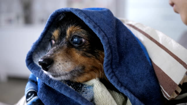 Small Dog After Bathing video