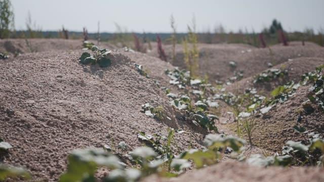 Small dry hills. Cinematic plan of dry soil. Desert.