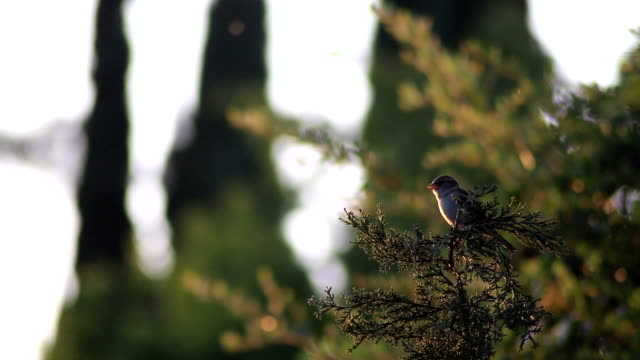 Small finch flies away from tree branch video