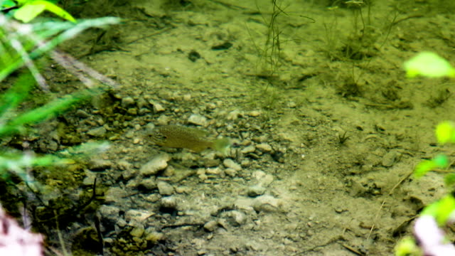 A small fish in the clear water of the lake video