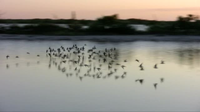 Small flock of birds in the sunset video