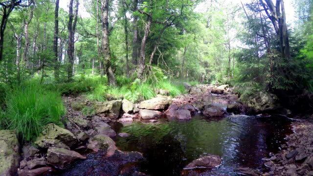 Small forest river.