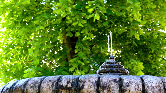 Small fountain with tree in background