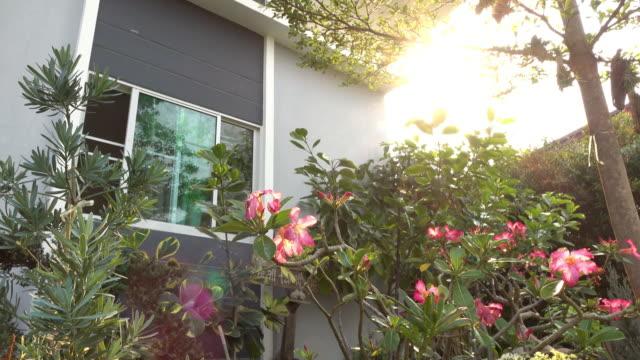 liten trädgård i hem, dolly sköt 4k - liten bildbanksvideor och videomaterial från bakom kulisserna
