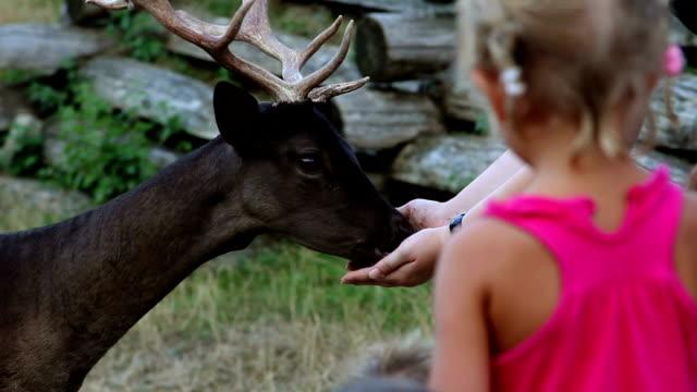 stockvideo's en b-roll-footage met hd stock: small girl caressing deer - teenager animal