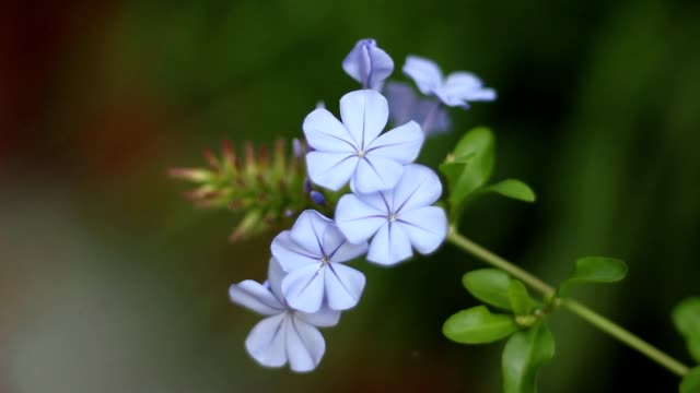 Small graceful flower suddenly in focus video