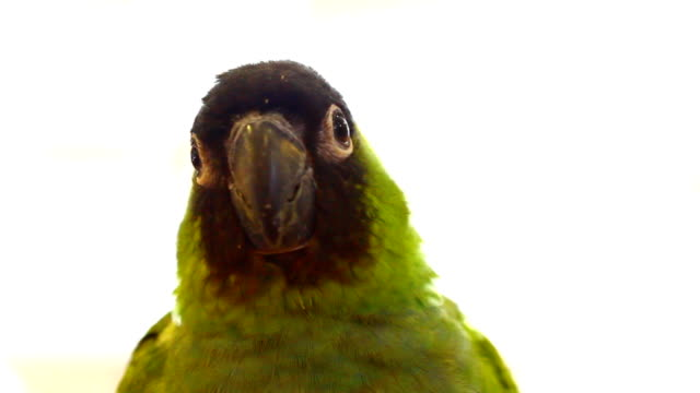 small green parrot video