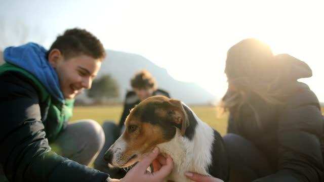 stockvideo's en b-roll-footage met kleine groep tieners spelen met zwerfhond in het veld. broers en zuster in de rug licht - teenager animal
